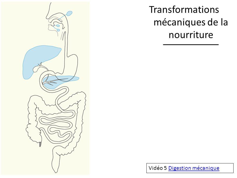 Transformations mécaniques de la nourriture