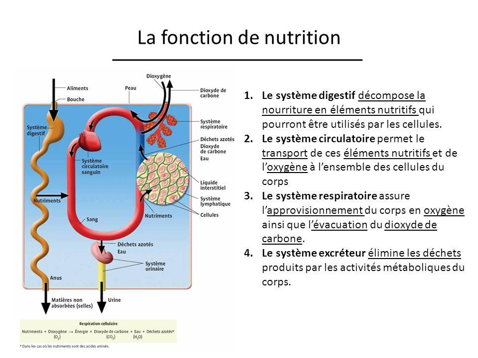 La fonction de nutrition