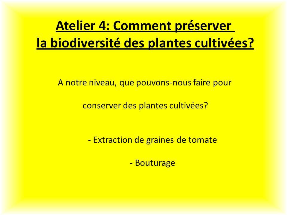 Atelier 4: Comment préserver la biodiversité des plantes cultivées
