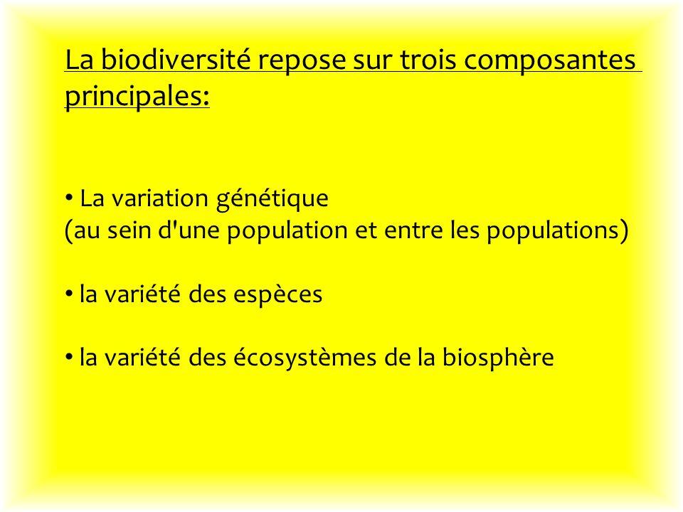 La biodiversité repose sur trois composantes principales: