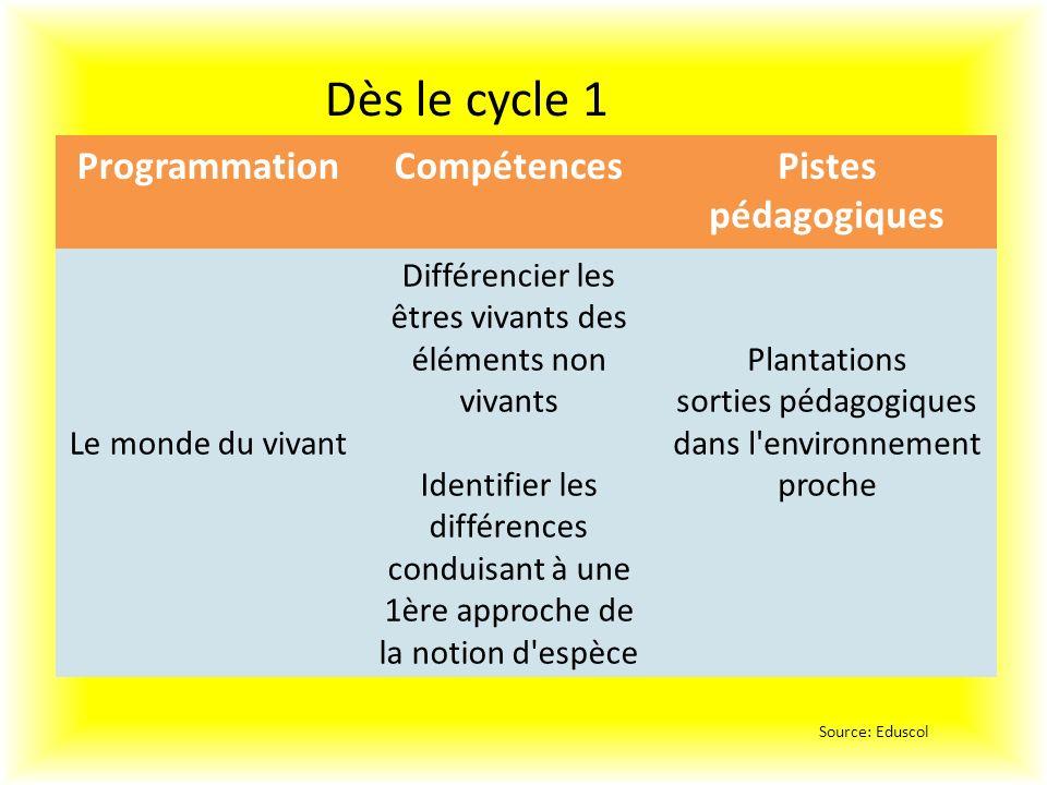 Dès le cycle 1 Programmation Compétences Pistes pédagogiques