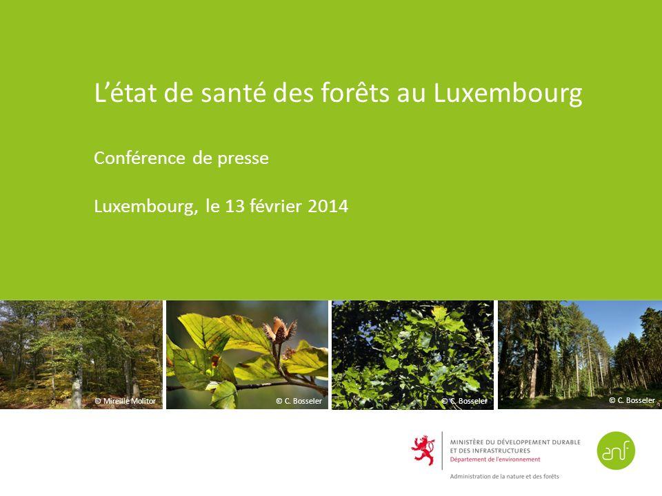 L'état de santé des forêts au Luxembourg