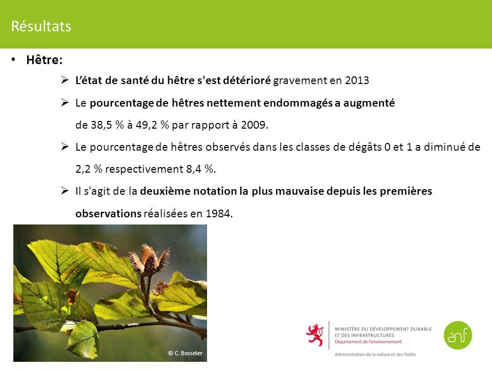 Résultats Hêtre: L'état de santé du hêtre s est détérioré gravement en 2013.