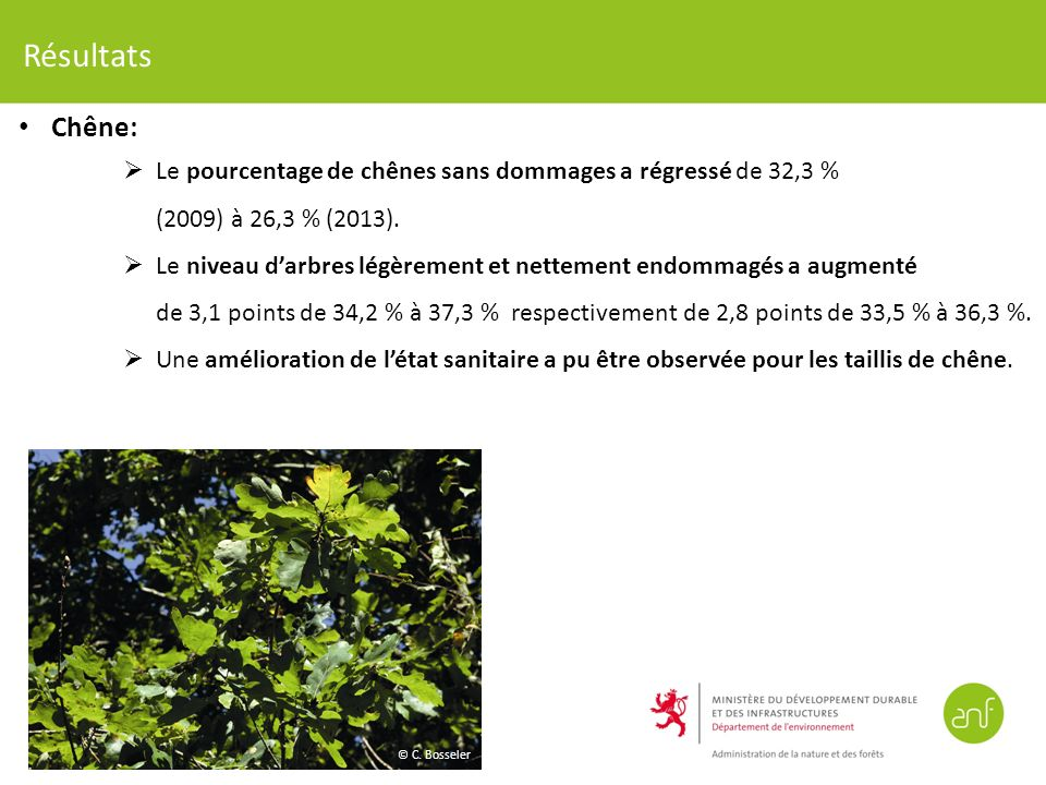 Résultats Chêne: Le pourcentage de chênes sans dommages a régressé de 32,3 % (2009) à 26,3 % (2013).