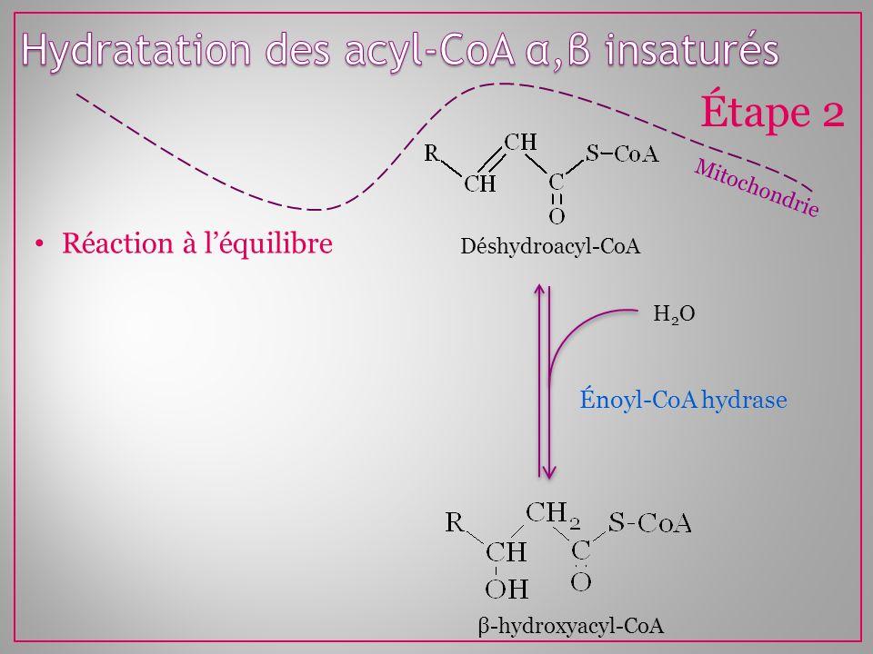 Hydratation des acyl-CoA α,β insaturés
