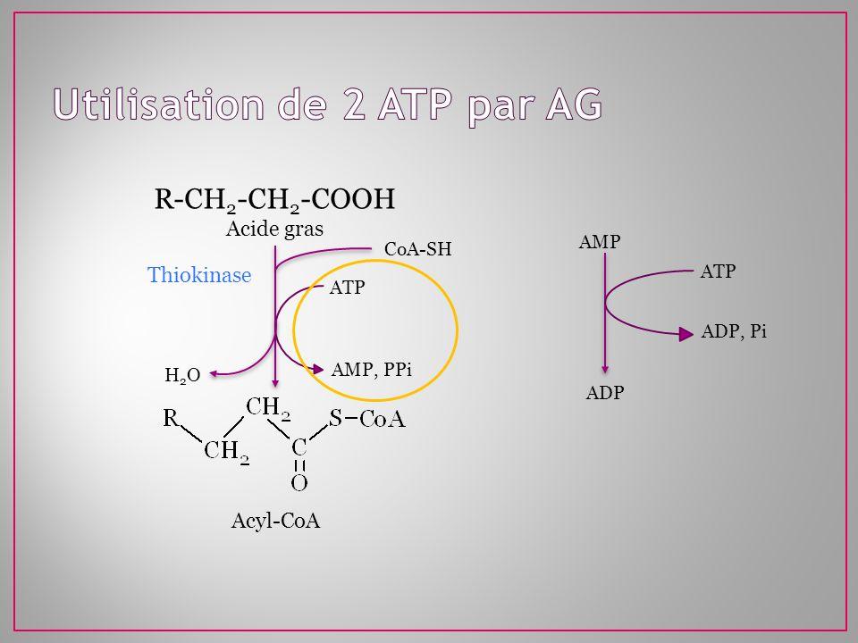 Utilisation de 2 ATP par AG