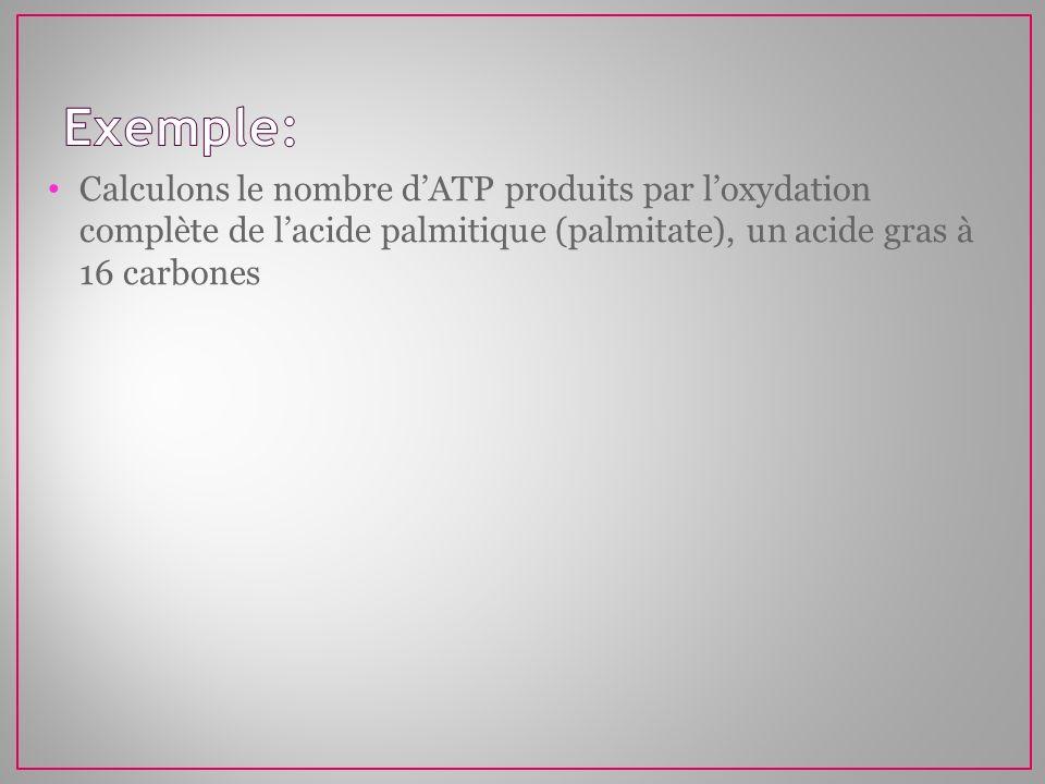 Exemple:Calculons le nombre d'ATP produits par l'oxydation complète de l'acide palmitique (palmitate), un acide gras à 16 carbones.