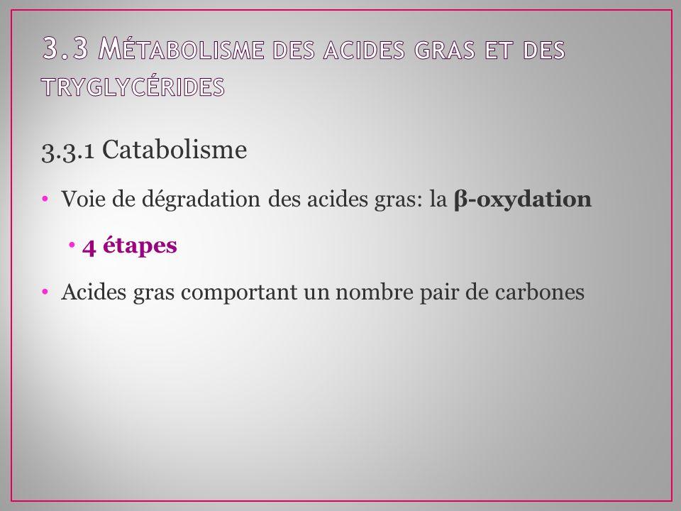 3.3 Métabolisme des acides gras et des tryglycérides