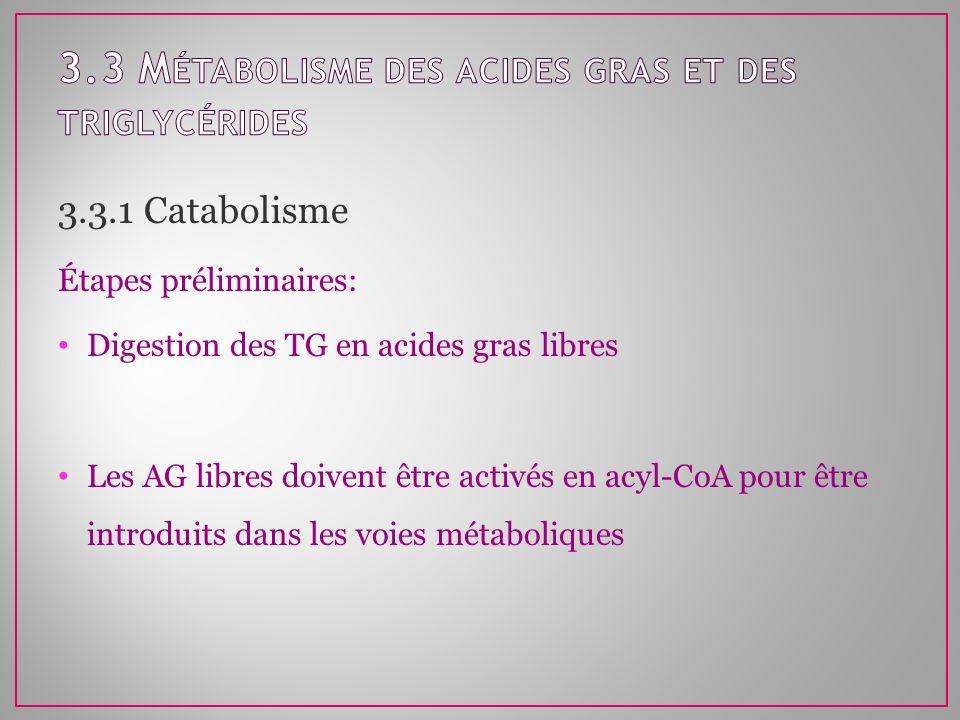 3.3 Métabolisme des acides gras et des triglycérides