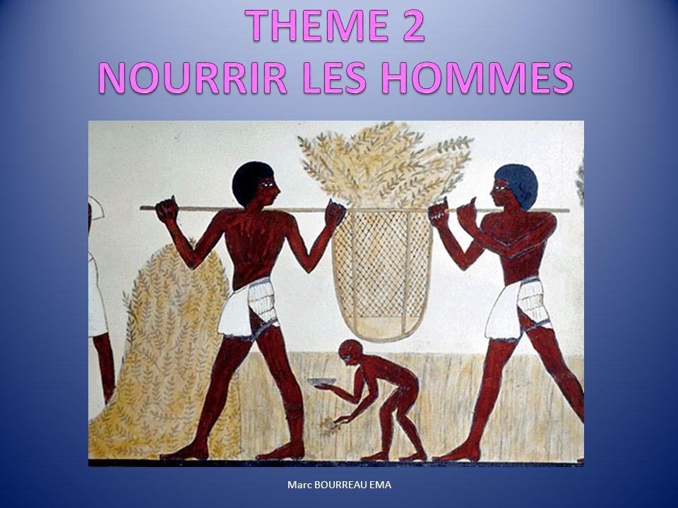 THEME 2 NOURRIR LES HOMMES