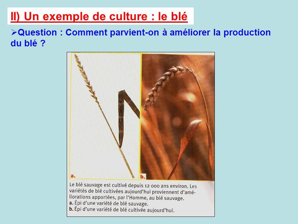 II) Un exemple de culture : le blé