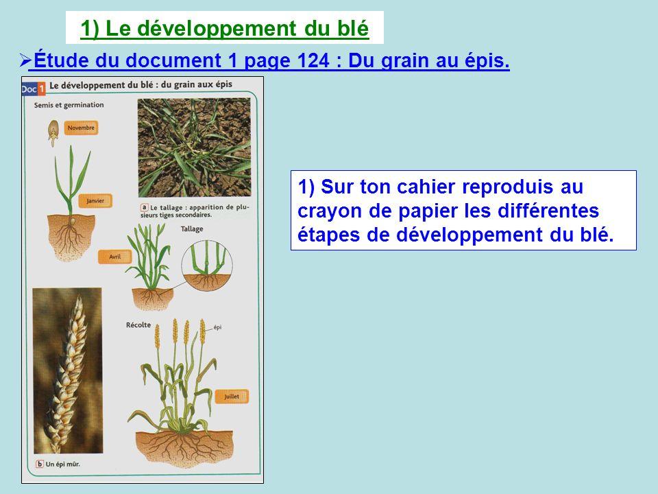 1) Le développement du blé