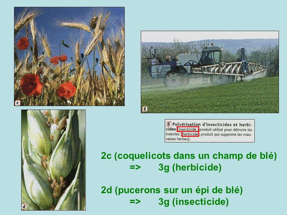 2c (coquelicots dans un champ de blé) => 3g (herbicide)