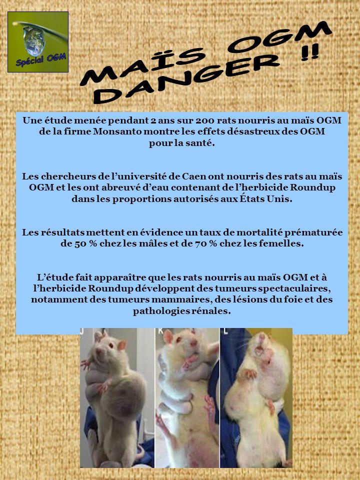 MAÏS OGM DANGER !! Spécial OGM