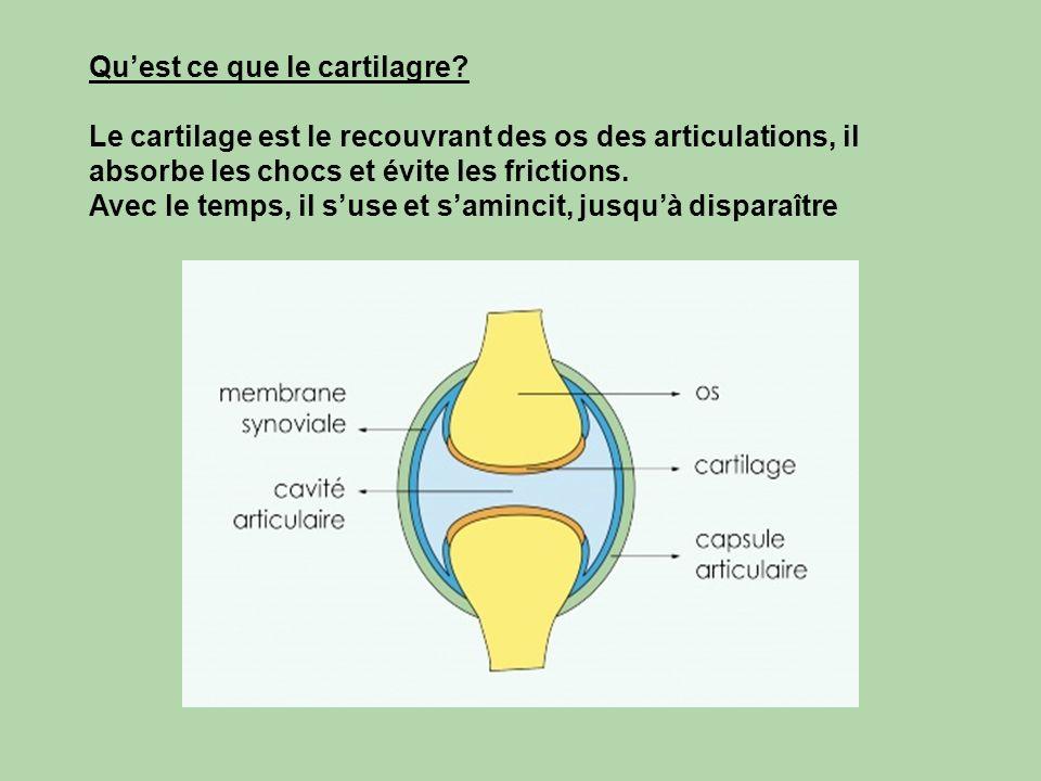 Qu'est ce que le cartilagre