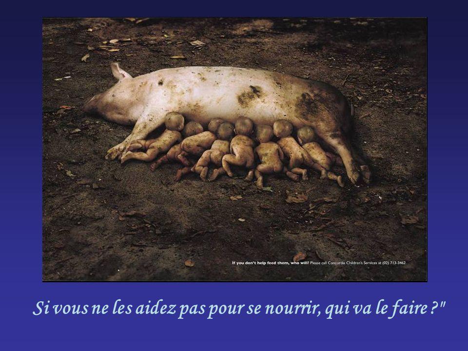Si vous ne les aidez pas pour se nourrir, qui va le faire