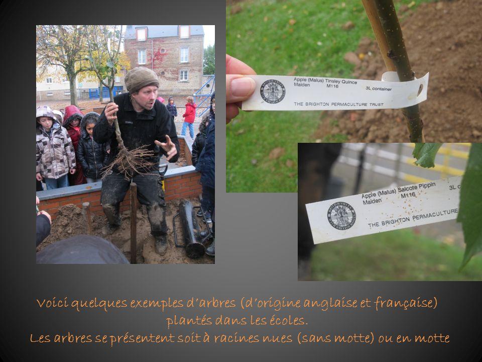 Voici quelques exemples d'arbres (d'origine anglaise et française) plantés dans les écoles.