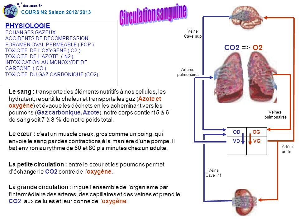 Circulation sanguine CO2 => O2 PHYSIOLOGIE