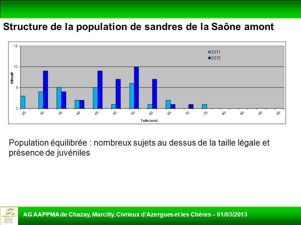 Structure de la population de sandres de la Saône amont