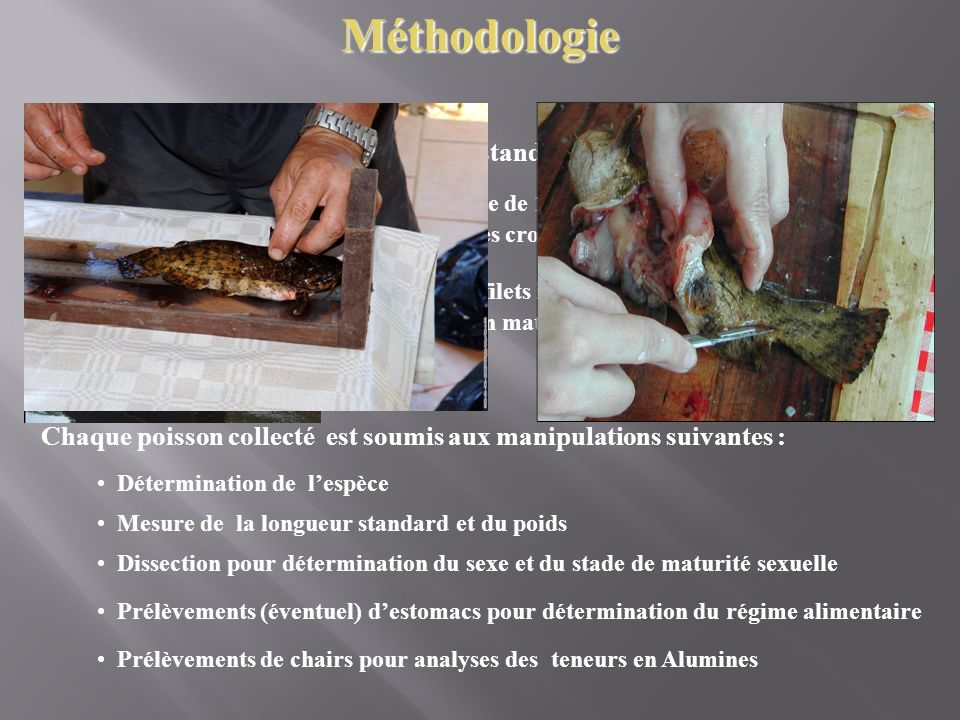 Méthode standardisée et reproductible :
