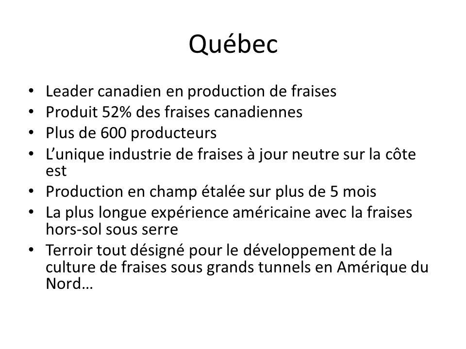 Québec Leader canadien en production de fraises