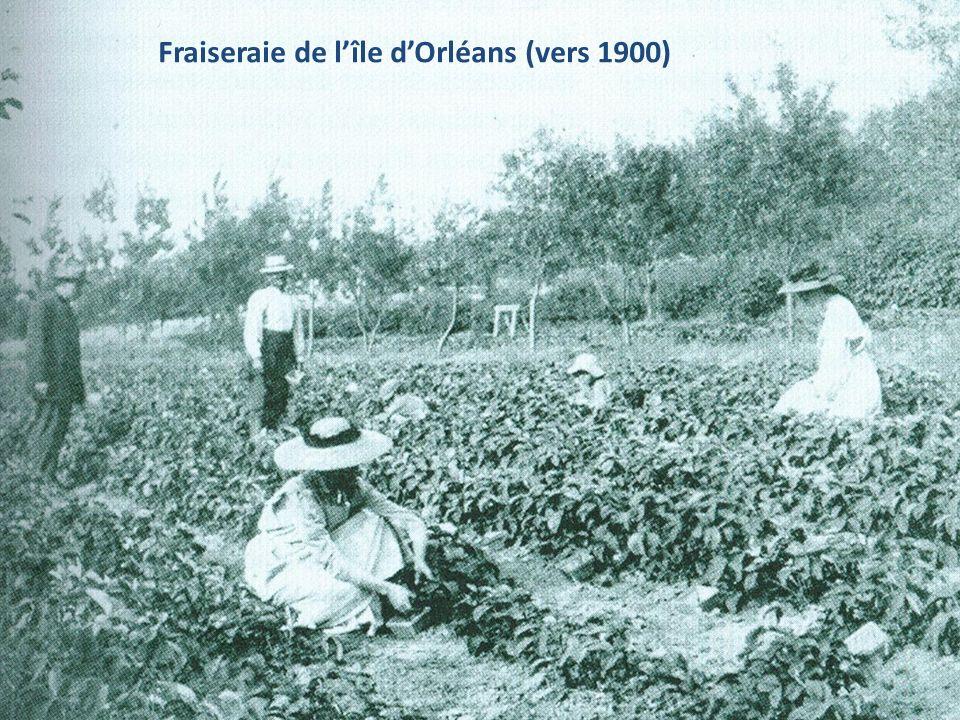 Fraiseraie de l'île d'Orléans (vers 1900)