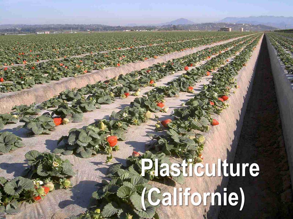 Plasticulture (Californie)