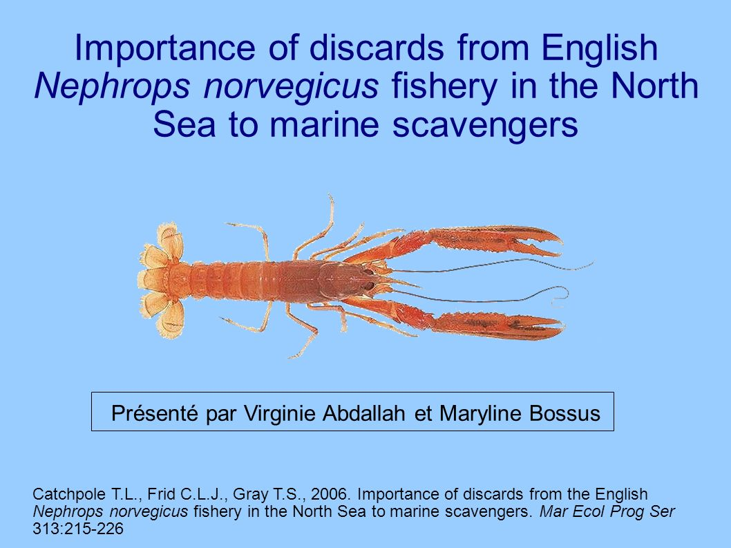 Importance of discards from English Nephrops norvegicus fishery in the North Sea to marine scavengers