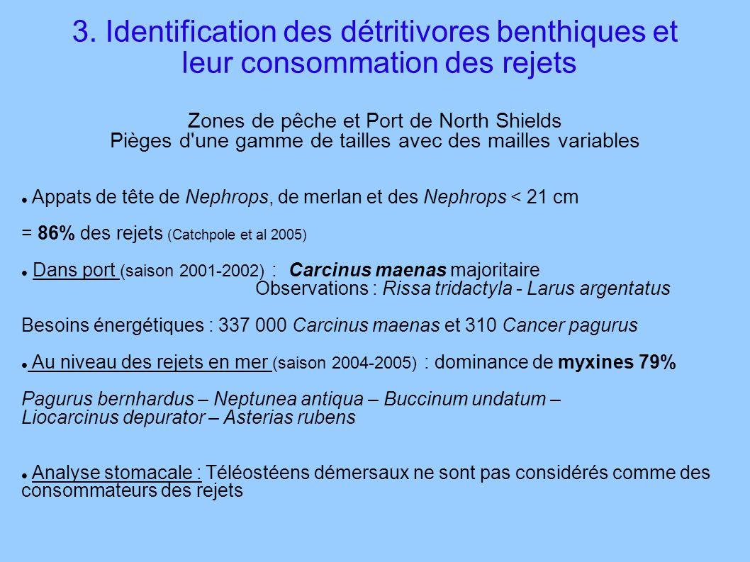 3. Identification des détritivores benthiques et