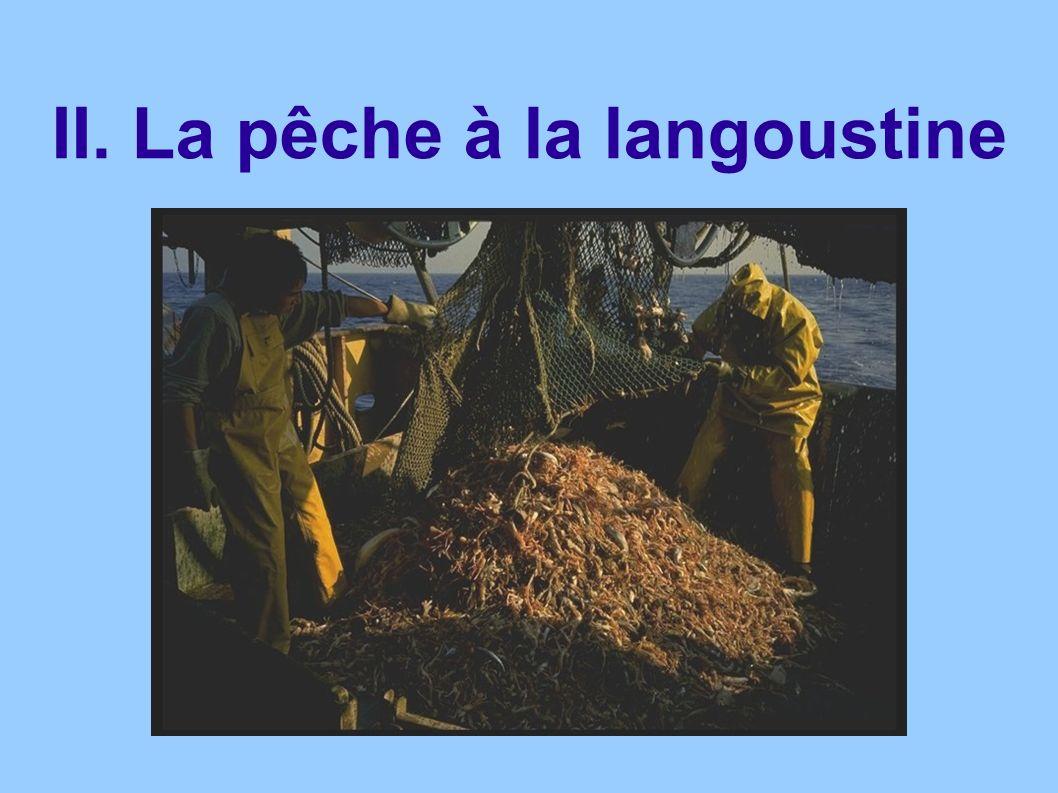 II. La pêche à la langoustine