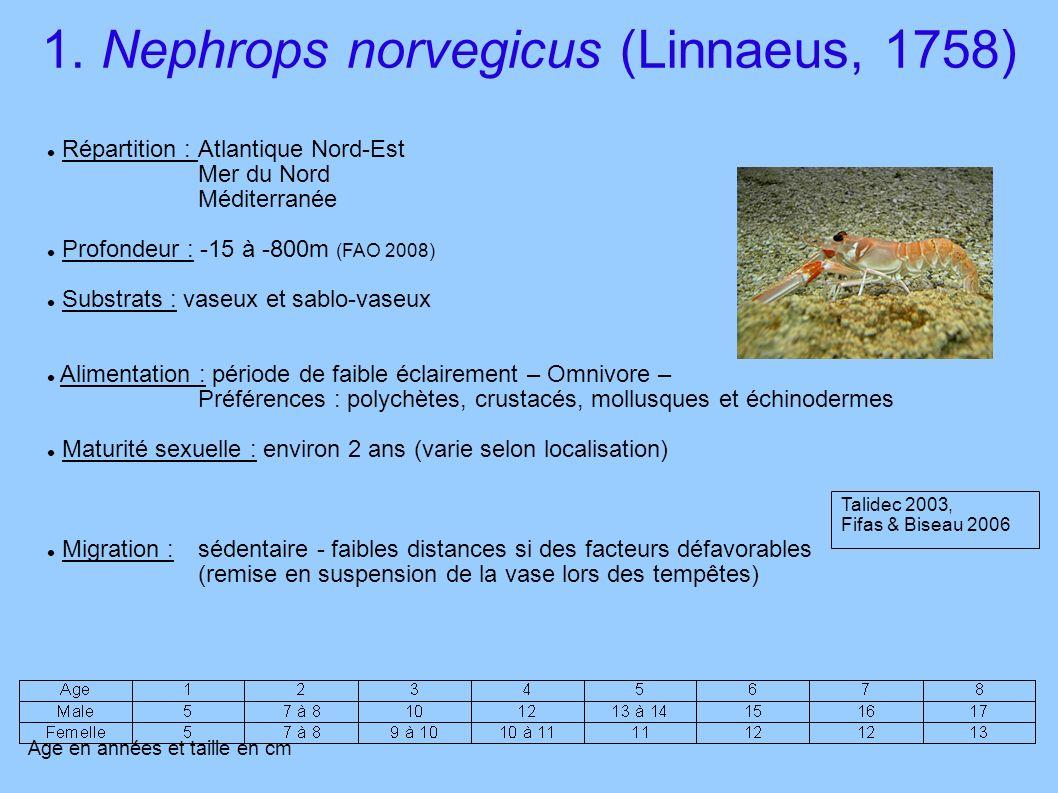 1. Nephrops norvegicus (Linnaeus, 1758)
