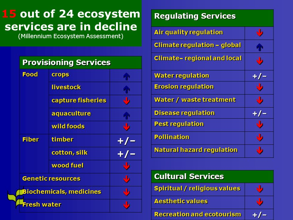 15 out of 24 ecosystem services are in decline
