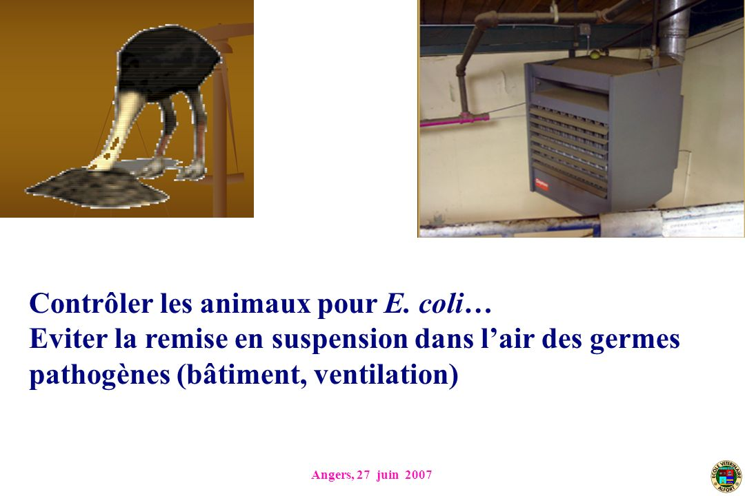 Contrôler les animaux pour E. coli…