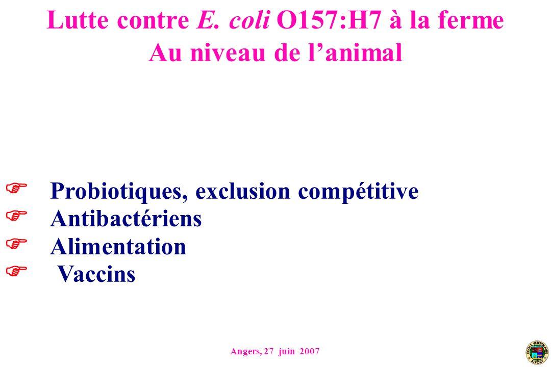 Lutte contre E. coli O157:H7 à la ferme