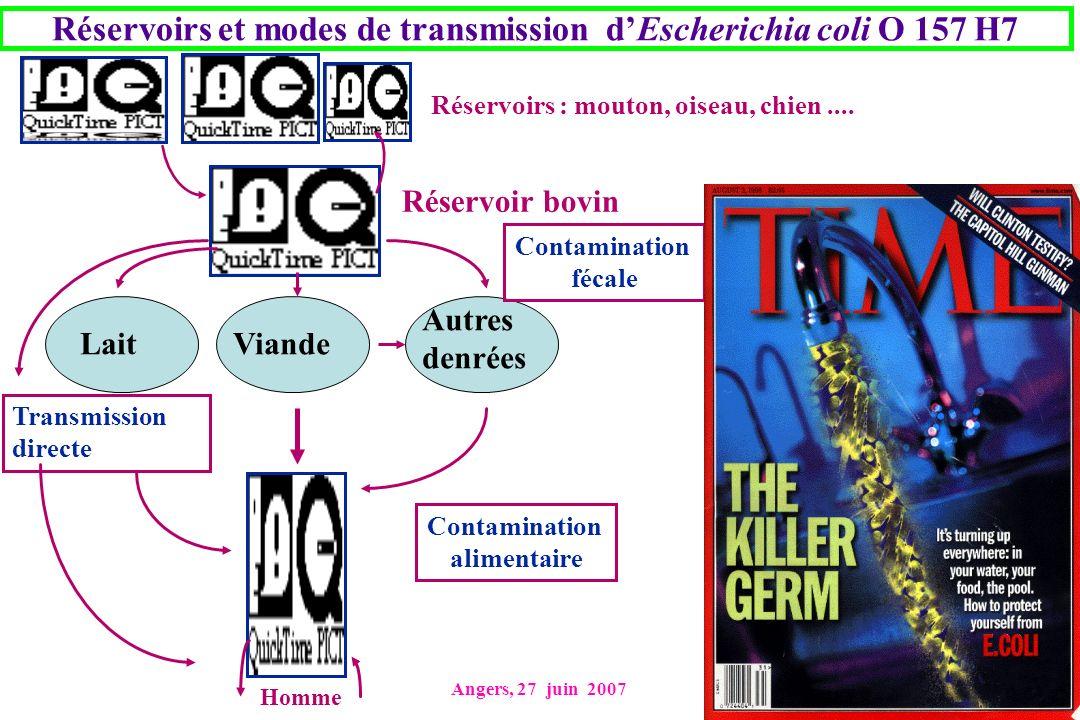 Réservoirs et modes de transmission d'Escherichia coli O 157 H7