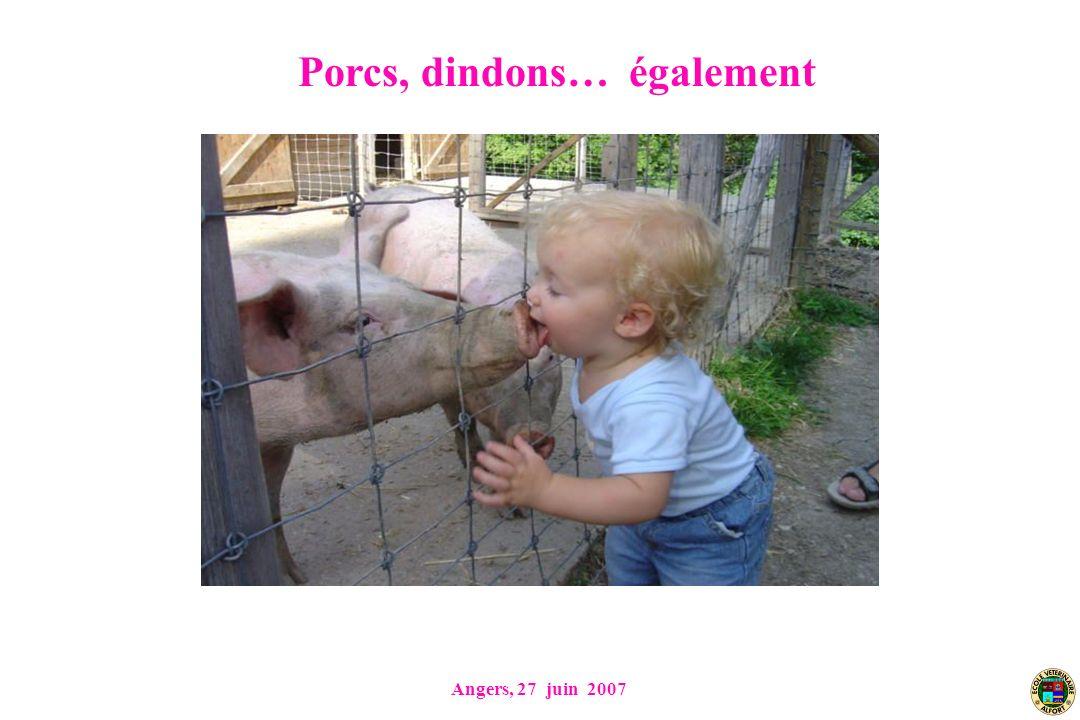 Porcs, dindons… également