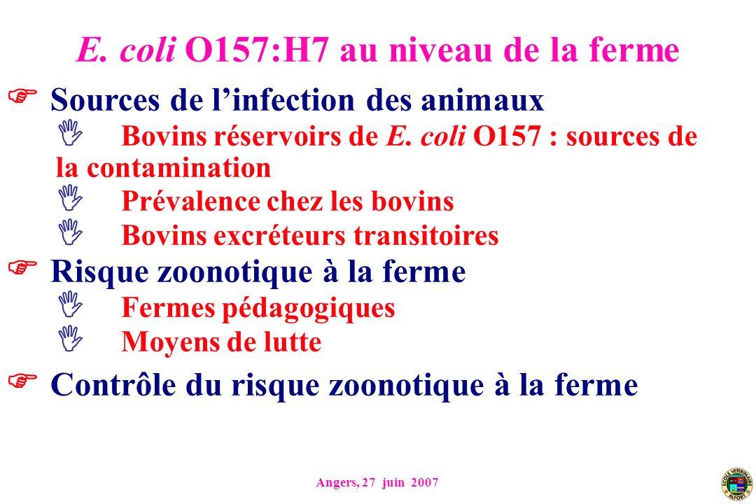 E. coli O157:H7 au niveau de la ferme