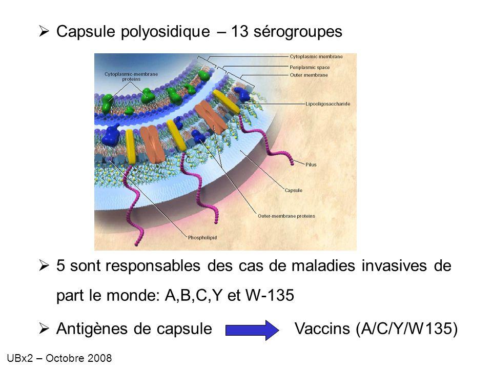 Capsule polyosidique – 13 sérogroupes