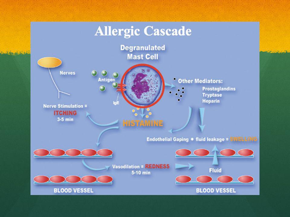 Histamine: cause contraction musculaire, augmente la pérmeabilité vasculaire, augmente les secretions nasal, bronchique et gastrique