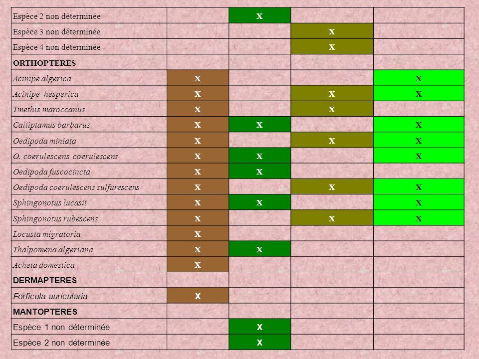 Espèce 2 non déterminée X. Espèce 3 non déterminée. Espèce 4 non déterminée. Orthopteres. Acinipe algerica.