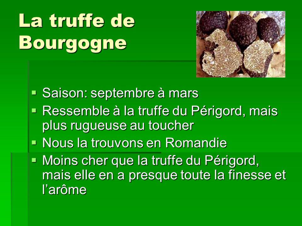 La truffe de Bourgogne Saison: septembre à mars