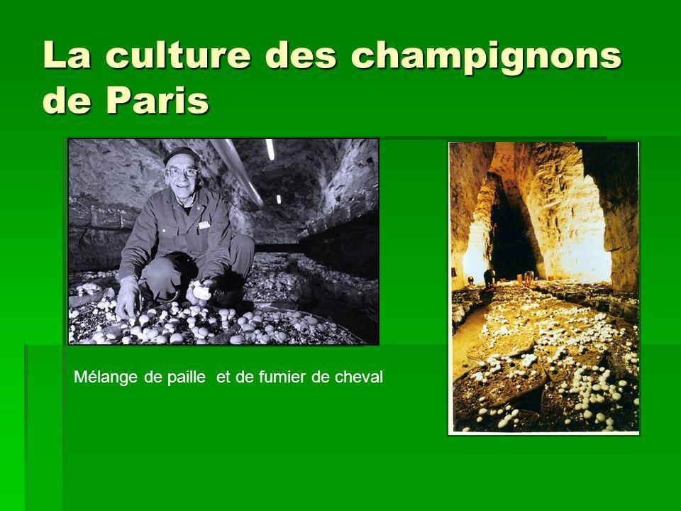 La culture des champignons de Paris