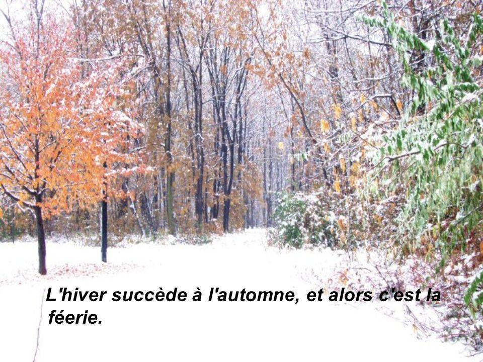 L hiver succède à l automne, et alors c est la féerie.