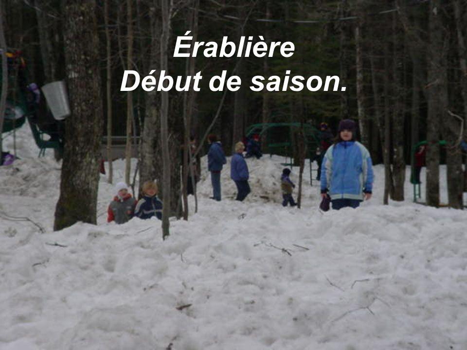 Érablière Début de saison.