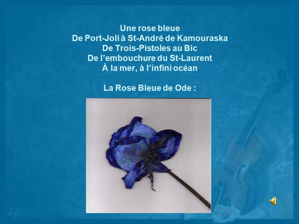 Une rose bleue De Port-Joli à St-André de Kamouraska De Trois-Pistoles au Bic De l'embouchure du St-Laurent À la mer, à l'infini océan La Rose Bleue de Ode :
