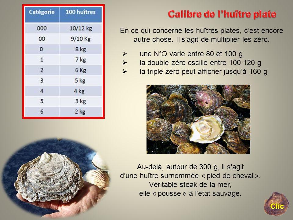 Calibre de l'huître plate