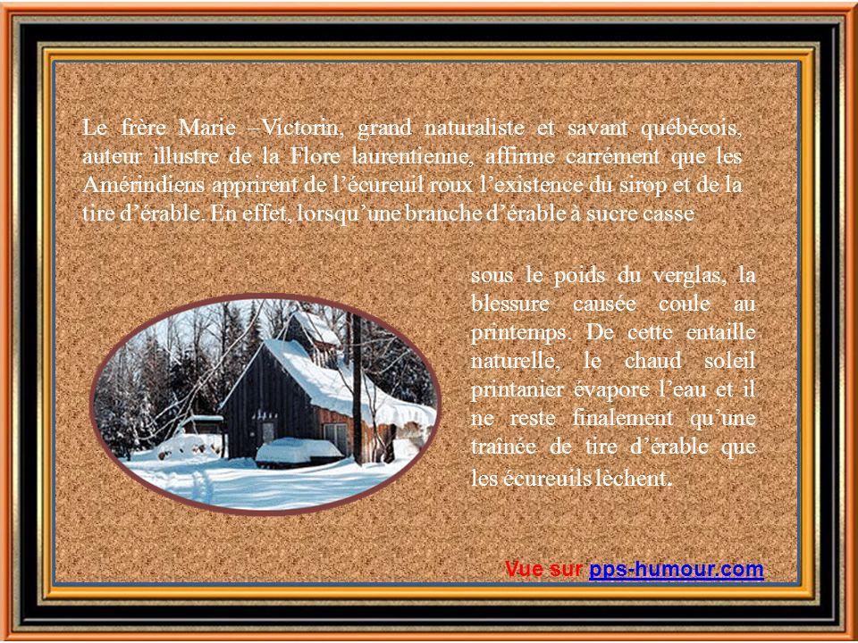 Le frère Marie –Victorin, grand naturaliste et savant québécois, auteur illustre de la Flore laurentienne, affirme carrément que les Amérindiens apprirent de l'écureuil roux l'existence du sirop et de la tire d'érable. En effet, lorsqu'une branche d'érable à sucre casse
