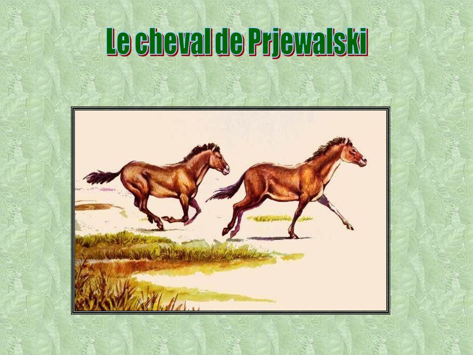 Le cheval de Prjewalski