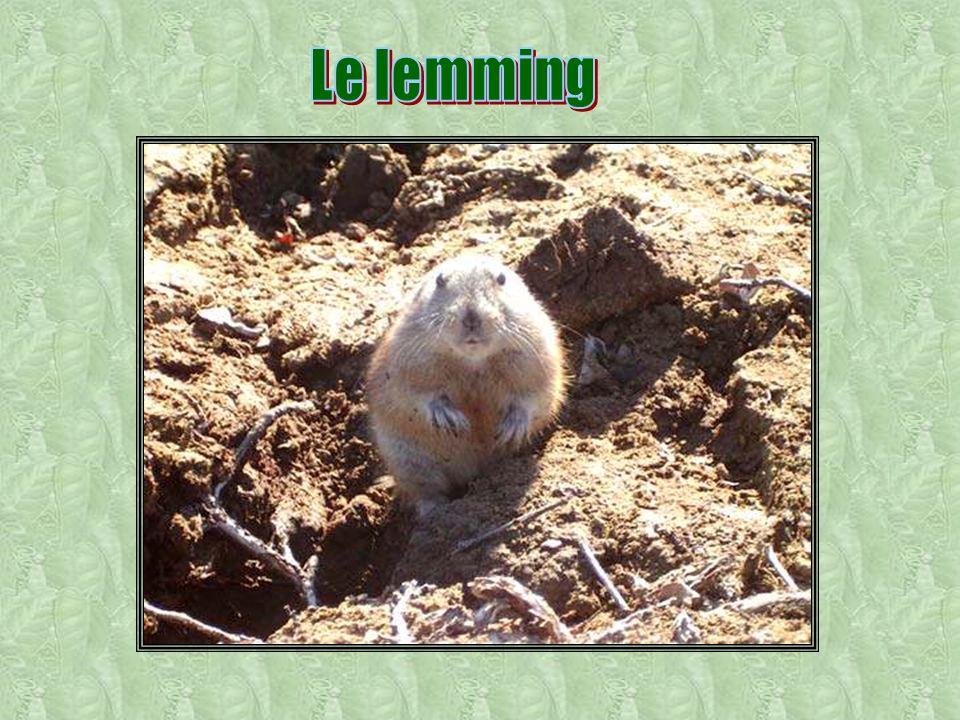 Le lemming