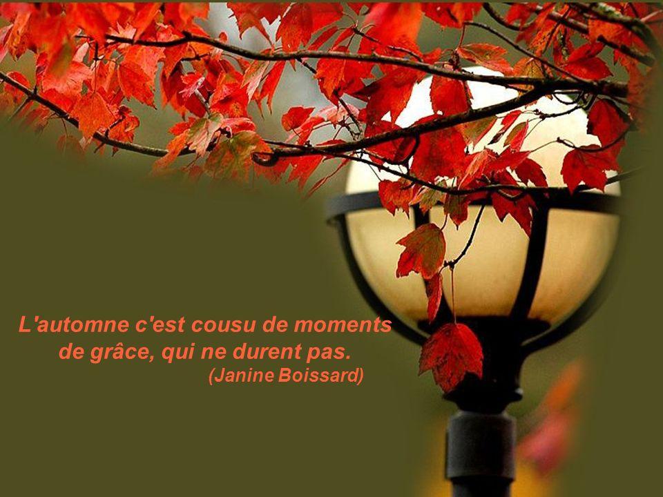 L automne c est cousu de moments de grâce, qui ne durent pas.